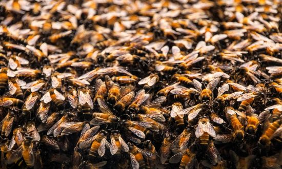 Woman in Critical Condition After Bees 'Covered Her From Head to Toe'