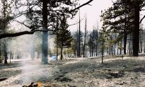 Couple's proposal is interrupted by devastating wildfire, they put it aside to help others