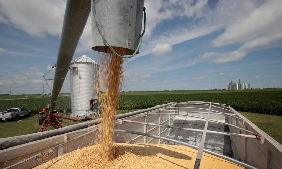 China Resumes Buying US Soybeans Amid Trade Truce