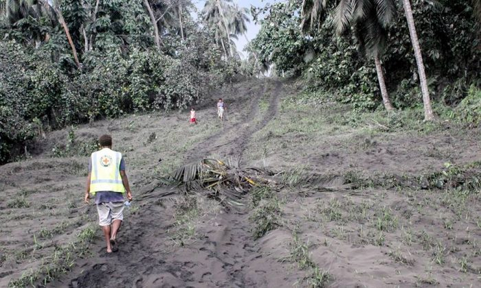 The landscape in Sakao has been transformed by the latest ash fall, plantations of coconuts, gardens, roads, water sources on the creeks were covered by thick ashes. Water supply and access is already a challenge. Nicholson Naki/Vanuatu Red Cross Society)