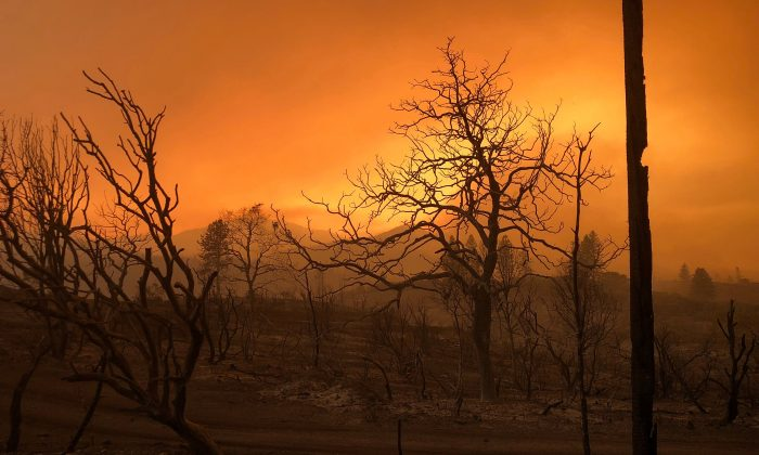 A blackened landscape is shown from wildfire damage near Keswick, California, on July 27, 2018.  (REUTERS/Alexandria Sage)