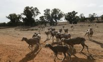 Australia's Most Populous State Is 100 Percent in Drought