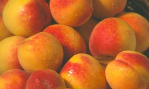 Where to Go Peach-Picking in South Carolina