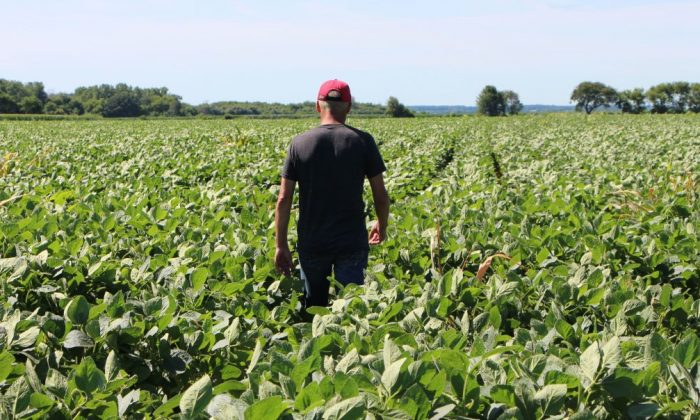 Farmer Terry Davidson walks through his soy fields in Harvard, Illinois, on July 6, 2018. On the same day China imposed retaliatory tariffs aimed at the US soybean market. (NOVA SAFO/AFP/Getty Images)
