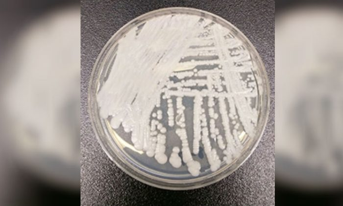 Public Warning Issued After Man Found With Fungal Superbug In Victoria