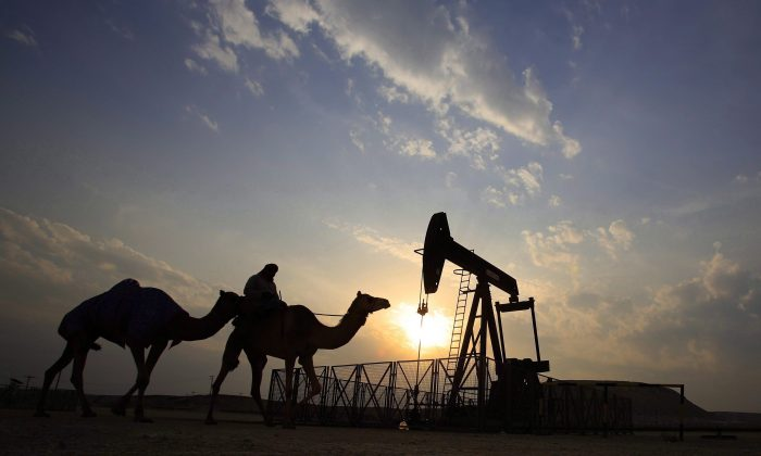 A man rides a camel through the desert oil field and winter camping area of Sakhir, Bahrain, in a file photo. Canadian health officials are evaluating the fallout of 800 Saudi medical residents and fellows leaving the health care system across the country.  (The Canadian Press/AP/Hasan Jamali)