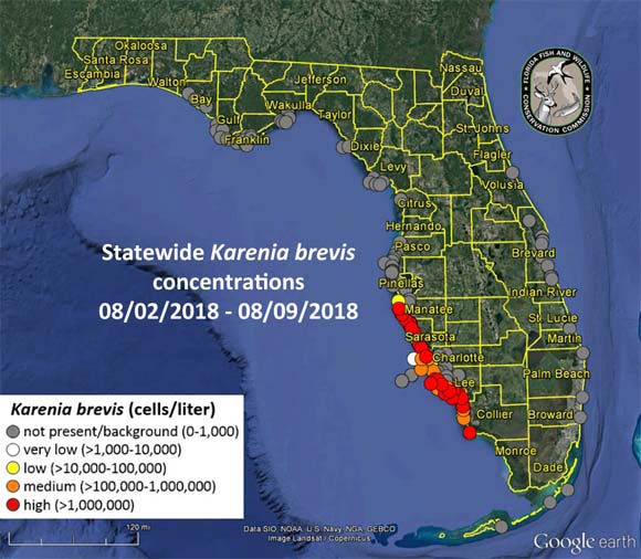 Gov. Scott Issues Emergency Order for Red Tide