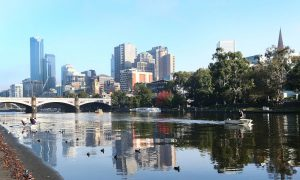 Dolphins and a Seal Spotted Swimming in Melbourne's Yarra River