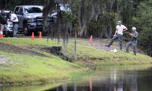 Woman Killed by Alligator in South Carolina Was Trying to Protect Dog