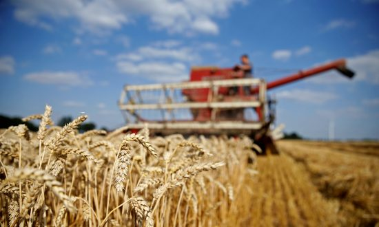 Global Wheat Supply to Crisis Levels; Big China Stocks Won't Provide Relief