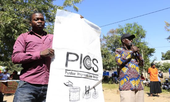 New Sack Technology Goes Long Way in Safeguarding Grain for Tanzanian Farmers