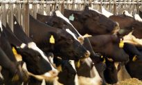 Cargill Recalls 25,000 lbs of Possibly Contaminated Beef