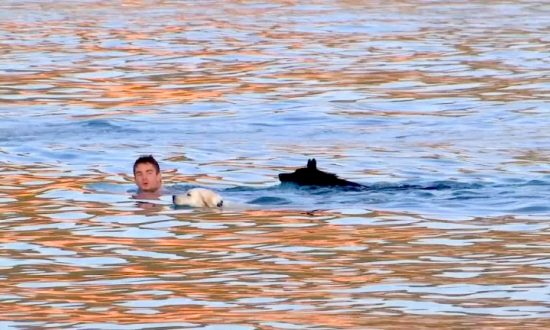 Dogs and Owners Compete in Swimming Race on Croatian Island
