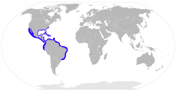 Distribution map of the Bonnethead Shark