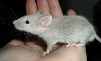 California May Be the First State to Ban Cosmetics Tested on Animals