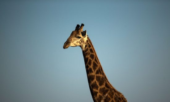 'Covered in Blood': Giraffe Attacks Mother and 3-Year-Old Boy