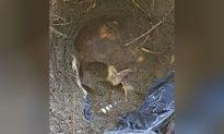 Mexican Prosecutors Find 166 Skulls in Mass Graves