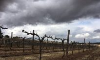 Australia's Drought Could Produce a Corker Vintage
