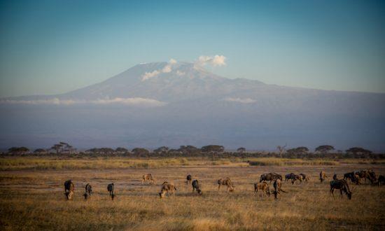 Kilimanjaro: Climbing My Way to Some Peace of Mind