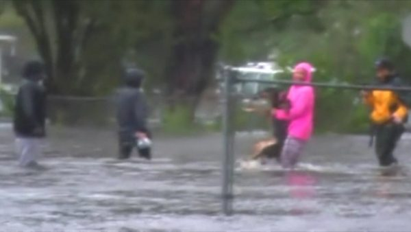 Reporter helps rescue injured therapy dog from Hurricane Florence floodwaters