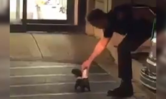Officer Risks Toxic Gas to Effect Rescue—of a Skunk