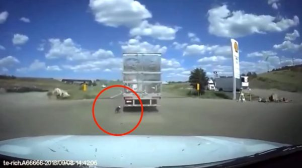 Dog dragged behind semi