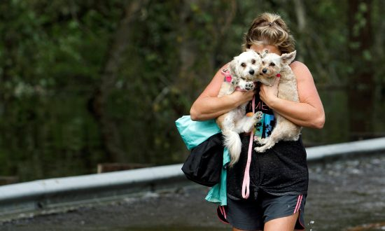 Florida Bill Would Make It Illegal To Leave Dogs Tethered in a Hurricane