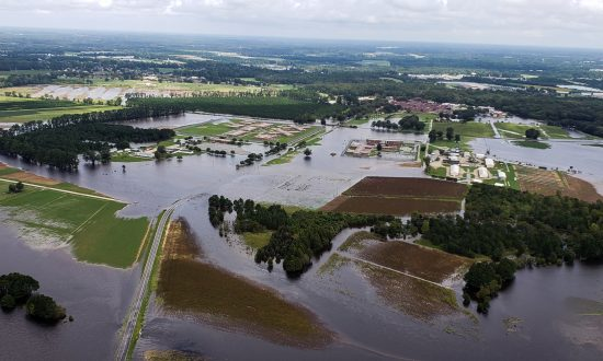 North Carolina Farmers Learned Nothing From Previous Hurricanes As Over 4 Million Animals Drown
