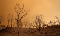 Largest Wildfire in California's History 100% Contained After 8 Weeks