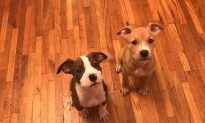 Puppies' Snouts Shut with Rubber Bands, Owner Gets Misdemeanor Charges