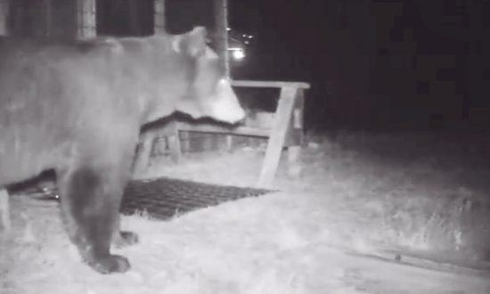 'Unwelcome Mat' Sends Black Bear Running