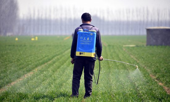 A Chinese farmer spraying pesticide in a wheat field in Chiping county in Liaocheng, east China's Shandong province in March. 