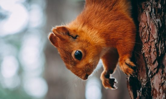 Woman Pushed from Flight Over 'Emotional Support Squirrel'