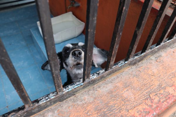A rescued stray dog in a cage at the Clinica Veterinaria Delegacional in Venustiano Carranza, Mexico City.