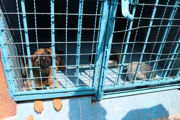 A rescued dog at the Clinica Veterinaria Delegacional in Venustiano Carranza, Mexico City.