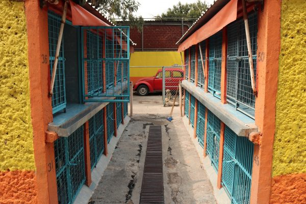 Animal cages at the Clinica Veterinaria Delegacional in Venustiano Carranza, Mexico City.