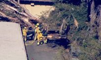 California Woman Dies After Her Car Was Hit by a Falling Tree