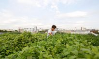 Paris Leads the Way in France's Growing Urban Farming Industry
