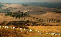 A Pecorino to Savor Under the Tuscan Sun