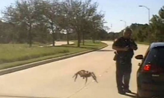 Video: 'Giant' Spider Crawls Toward Texas Cop During Traffic Stop