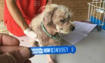 Inverell Man Escapes Jail for Cruelty to Puppies