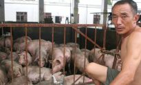 African Swine Fever Spreading to Southern China