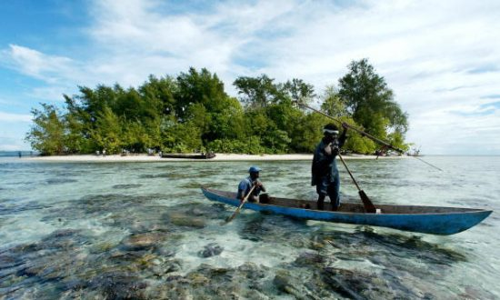 China's Timber Demand Is Destroying Forests in South Pacific Countries