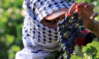 Lebanon Wines Bring Villages Back to Life and Emigrants Home