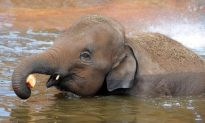 Two Baby Elephants Found Dead at Zoo: 'They Will be Missed'