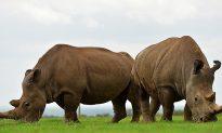World Wildlife Fund Report: 60 Percent Drop in Global Animal Populations