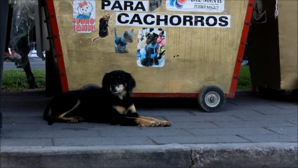 A street dog in Mineral del Monte, Mexico.