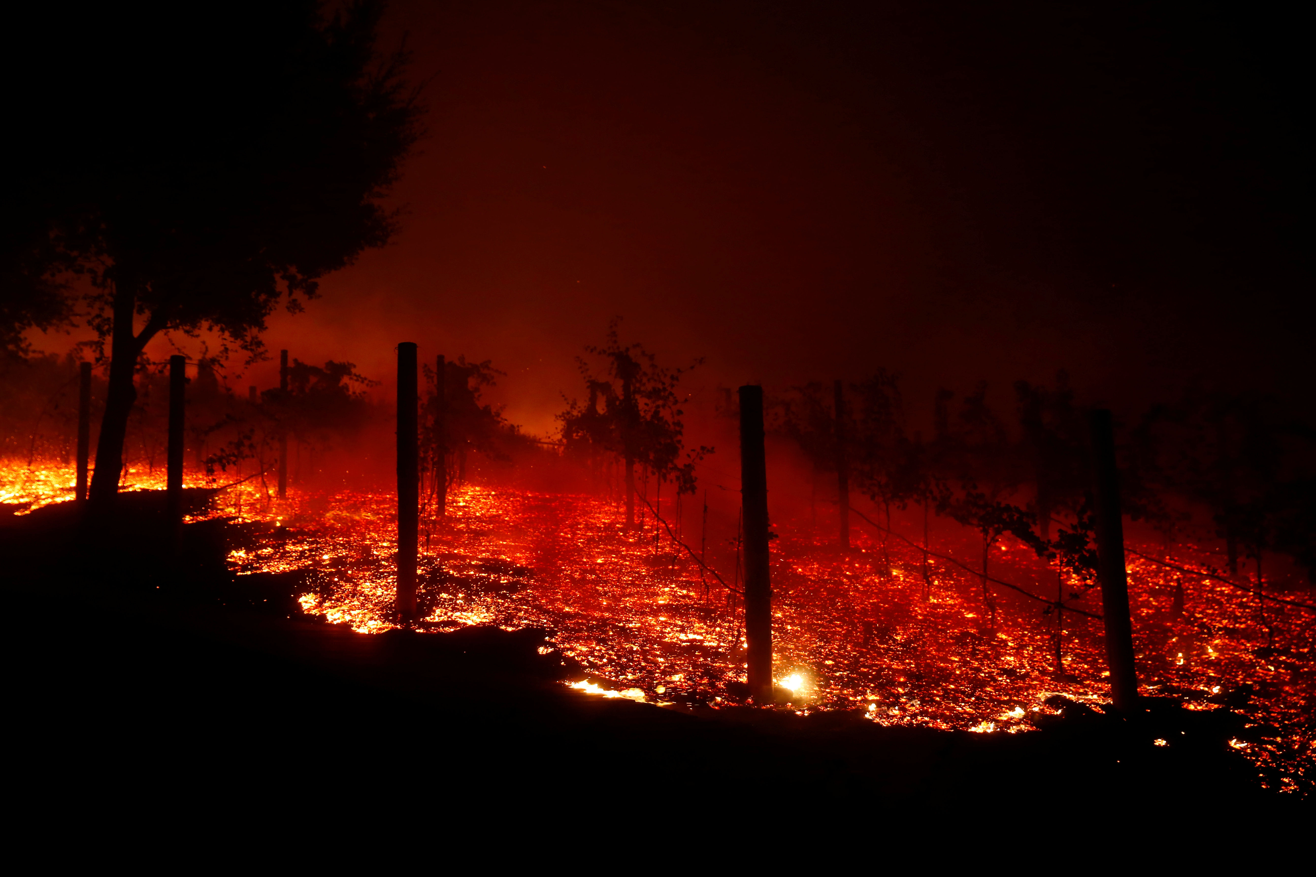 A vineyard burns overnight during a wildfire that destroyed dozens of homes in Thousand Oaks
