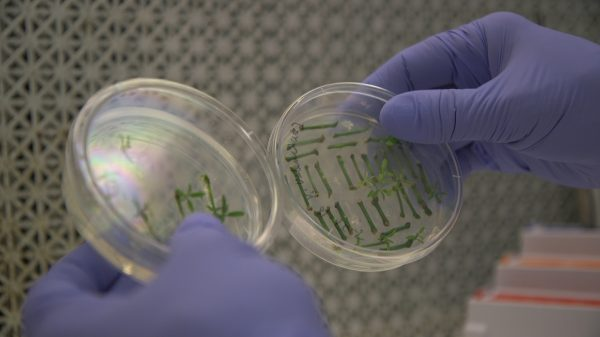 geneticist University of Florida Citrus