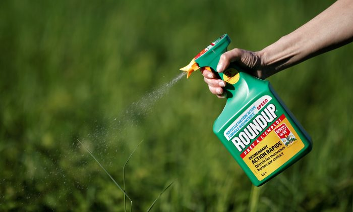 A woman uses a Monsanto's Roundup weedkiller spray without glyphosate in a garden in Ercuis near Paris, France, on May 6, 2018. (Benoit Tessier/Reuters)